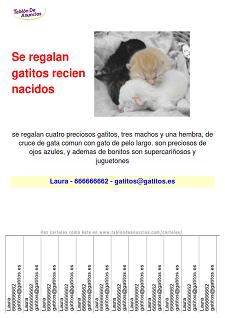 Ejemplo de carteles de mascotas