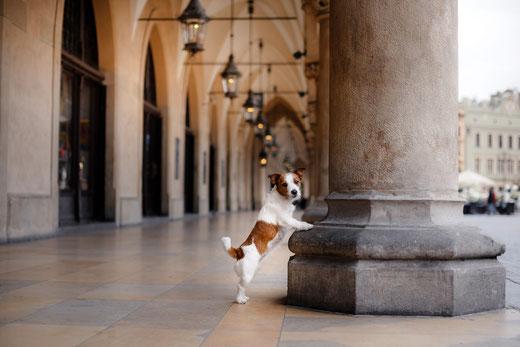 Encontrar perros perdidos