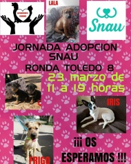 Jornada de adopción - Eventos celebrados a favor de los animales