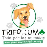 Fundación Trifolium - Refugios, protectoras y Eventos de protectoras de animales