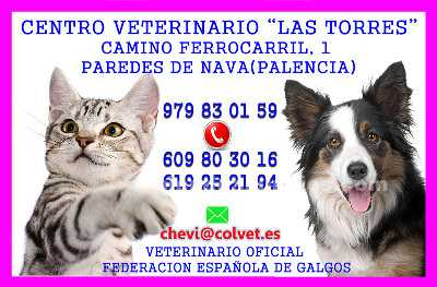 Clinica veterinaria paredes de nava
