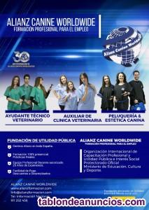 Curso Peluquería y Estética Canina Murcia