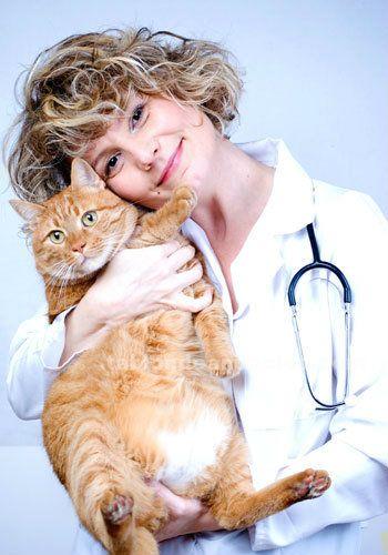 Clinica veterinaria gatos, murcia, zococan