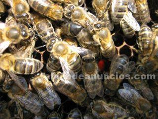 Museo - la casa de la miel