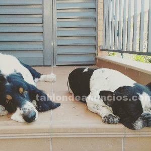 Residencia canina familiar