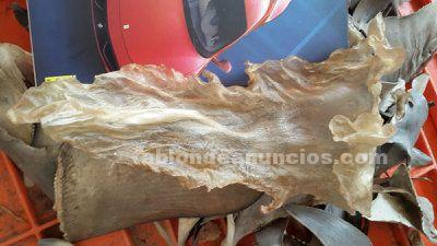 Buche seco de pescado (robalo)