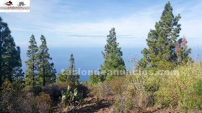 Tablon De Anuncios 49 Vende Terreno Rustico En Tijarafe La Palma