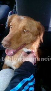 Adopta a tuxo !