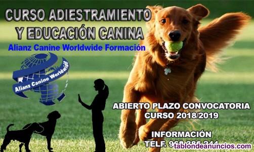 Curso adiestramiento y educación canina