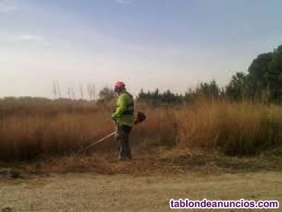 Desbroce y limpieza de terrenos en valencia  656926531