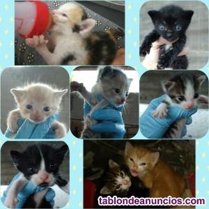 Gatitos pequeños en adopción
