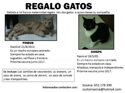 REGALO GATOS