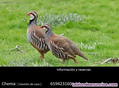 Dias sueltos de caza de perdiz roja