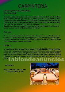 Maderas para muebles ,tarimas ,  parquets  y jardineria