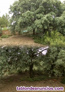 Cambio o vendo terreno rustico de 8000 m2- lagunas ruidea
