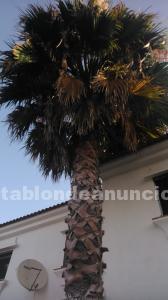 Poda árboles y palmeras - mantenimiento de jardines - endoterapia