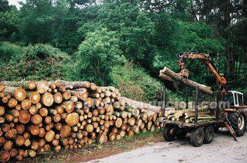 Inversion madera, inversion forestal