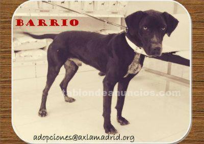 BARRIO. Perro en Adopción