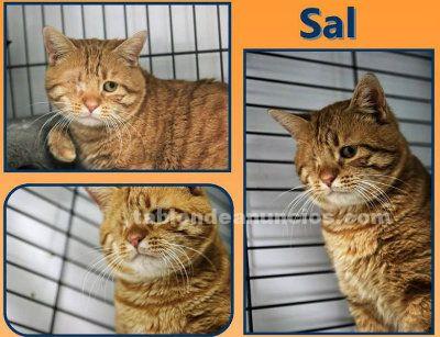 SAL. Gato en Adopcion