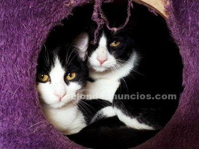 PILI Y MILI. Gata y Gato en Adopcion