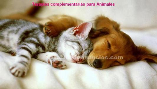 Terapia floral-comunicación animal.