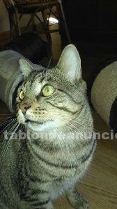 Flow (nacimiento 2010) gato en adopción madrid