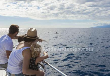 Whale and dolphin watching excursion in tenerife with kids | freebirdone