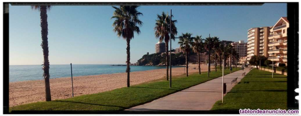 Apto 300 m playa costa brava