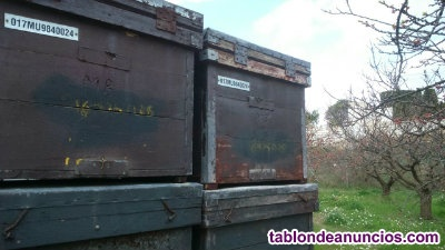 Venta cajas de colmenas layens