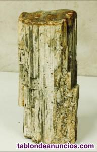 Tronco de madera fosilizado