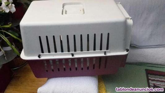 Transporting perros o gatos