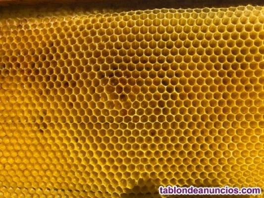 Venta de nucleos de abejas