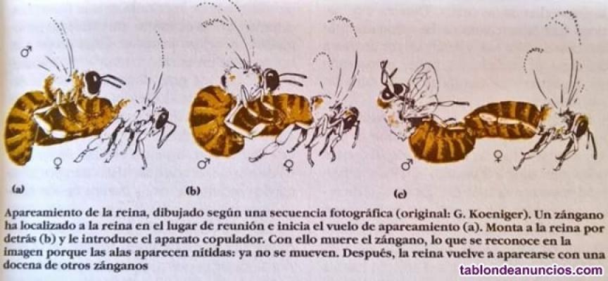 Núcleos de abejas