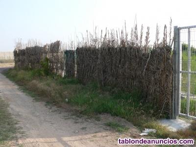 Se alquila campo de 6 hanegadas de regadío.  Camino Marey de Vilches.