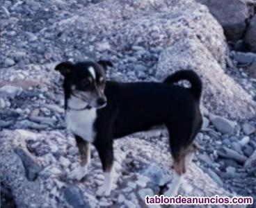 Perro bodeguero en adopción