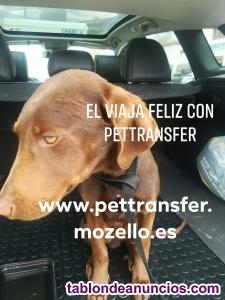 Pettransfer