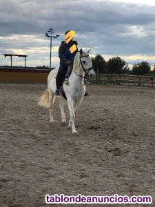 Vendo caballo