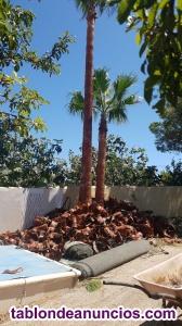 Podas de palmeras