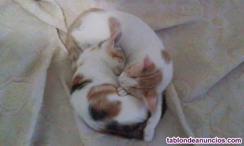 Regalo gatos
