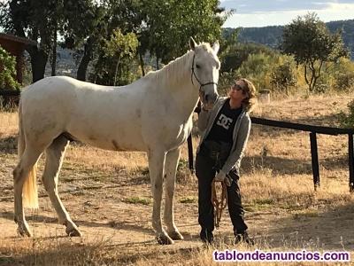 Centro Ecuestre horse natural life