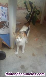 Gatos buscan hogar