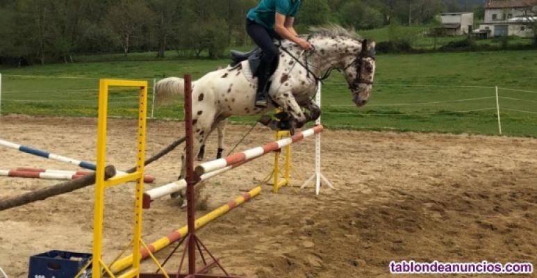 Venta de caballos