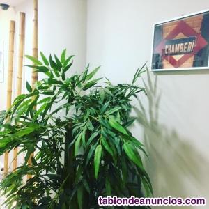 SE busca soci@ para trabajar e  invertir en una Clínica en Madrid!