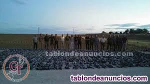 TIRADAS DE PALOMA TORCAZ EN MADRID 2020
