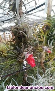 Plantas exóticas online