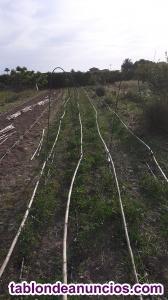Venta verduras y cítricos ecologicos