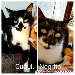 Adopcion de Negrito y Cuqui