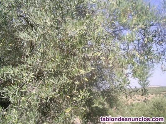 Vendo parcela olivos