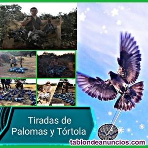 Tiradas de Palomas y Tórtola