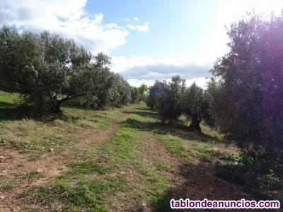 540 olivos secano en benatae (jaén)